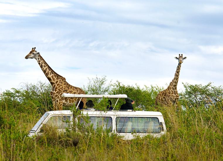kenya-safari-truck