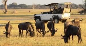 Adventure-Safari