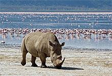 lake_nakuru_white_rhino